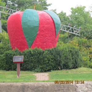 We thought of the Big Apple as we traveled past this large apple.  One of the big items grown in NY is apples.  The groves line the Erie Canal.